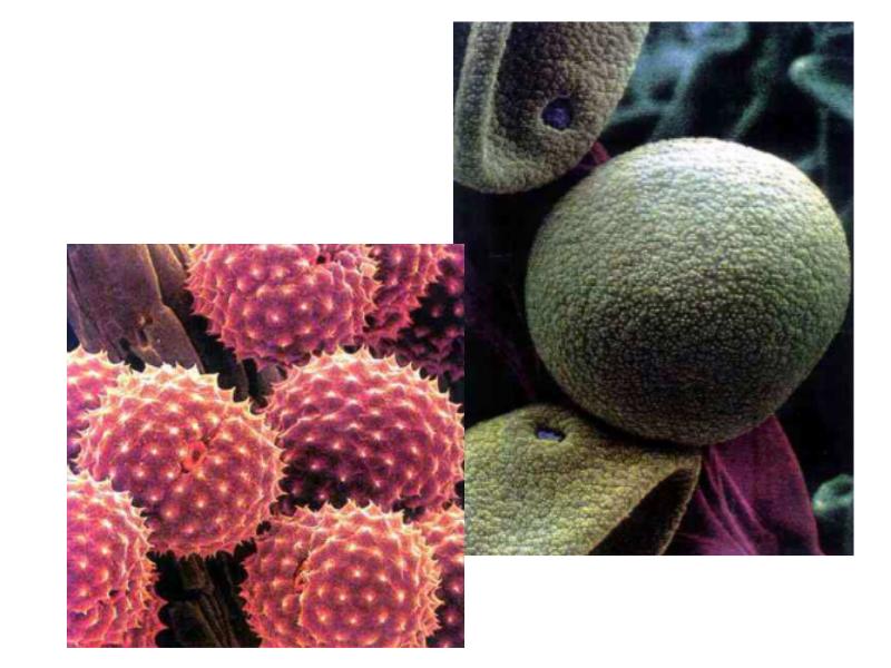 bakterie wentylacja